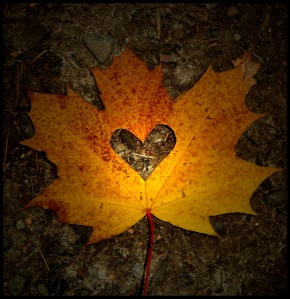 fall-heart-leaf